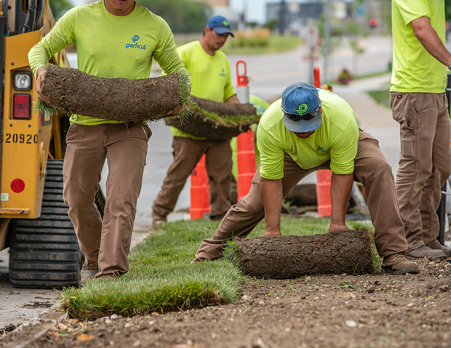 Perficut crew members rolling fresh sod